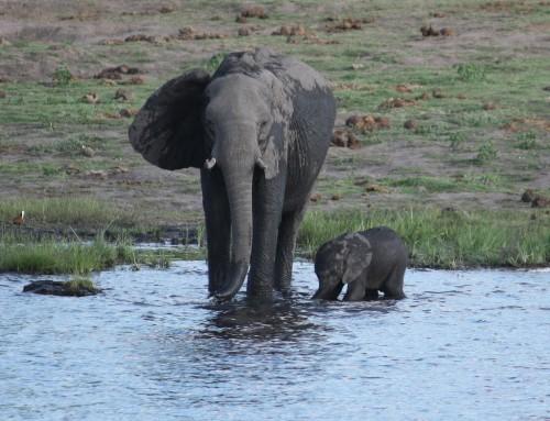 Abschluss-Safari